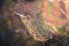 Spindelsammanträde i rengöringsduken Arkivbilder
