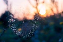 Spindelsammanträde i rengöringsduken Royaltyfria Foton