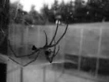 Spindelskal på fönster Royaltyfria Foton