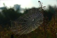 Spindelspindelnät royaltyfri bild
