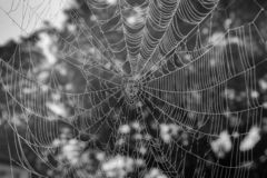 Spinder-Netz mit Nebelwassertropfen lizenzfreie stockfotos