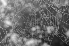 Spinder web with fog water drop royalty free stock image