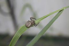 Spindlar är överallt Fotografering för Bildbyråer