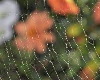 Spindlar är konstnärer Arkivbild
