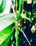 spindlar Royaltyfri Bild