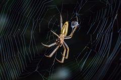 spindlar Arkivbilder