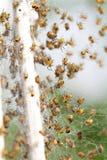 spindlar Arkivfoto