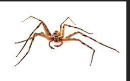 Spindlar 2 royaltyfria bilder