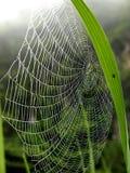 Spindlar i misten i morgonen royaltyfria foton