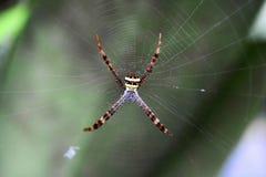 Spindlar i rengöringsduk Arkivbilder