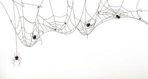 Spindlar och spindelrengöringsduk stock illustrationer