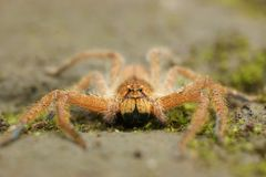 spindlarna i skogomr?det, Bandung, Indonesien arkivbilder
