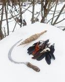 Spindle, пер вороны, шарики рябины черепа птицы и серп в стоковые изображения rf