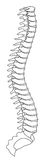 Spine. Vector curve spine. 8 eps Stock Photo