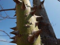 Spine Fotografie Stock