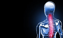 Spine Anatomy concept Stock Photos