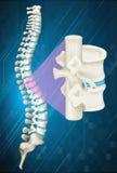 Spine bone on blue background Stock Photo