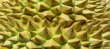 Spine del fondo del durian Fotografia Stock