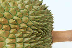 Spine della frutta del durian Immagini Stock
