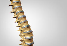 Spine Diagnostic Royalty Free Stock Images