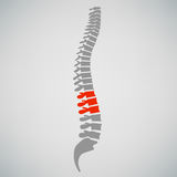 Spine Diagnostics Symbol Design Royalty Free Stock Photography