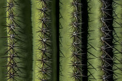 Spine dorsali del saguaro, parco nazionale del saguaro immagini stock libere da diritti