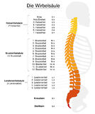 Spine German Labeling. Human spine with names and numbers of the vertebras - GERMAN LABELING! Isolated vector illustration on white background Stock Photography