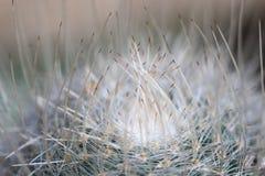Spine nest Stock Photo