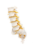 Spine preparation Royalty Free Stock Photo