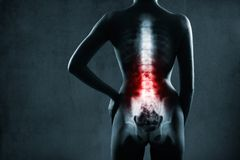 Spine in x-ray.  Lumbar spine is highlighted. Stock Images