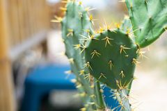 Spine taglienti, alberi del cactus, luce verde, luce del giorno immagine stock libera da diritti