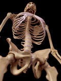 The spine and thorax Royalty Free Stock Photos