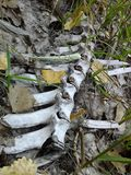 Spine Stock Photos