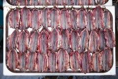 Spined Anchioves, pescado aceitoso, vendido en un fishmarket Imágenes de archivo libres de regalías
