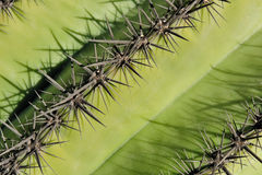 Spines on cactus Stock Photo