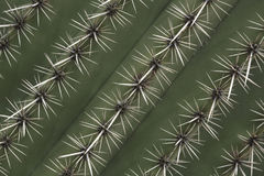 Spines of a cactus stock photos
