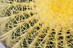 Spines on the cactus Stock Photo