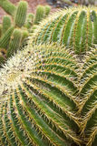 Spines on green cactus. Close up of spines on giant green cactus Stock Photo