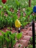 Spring coming soon in Algeria royalty free stock photos