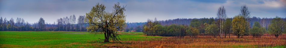 Sping field panorama Royalty Free Stock Photo