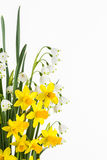 Sping flowering bulbs Royalty Free Stock Images