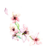 The sping flowers of the tree  watercolor  Royalty Free Stock Photo