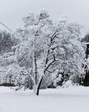 Tree covered in heavy snow Royalty Free Stock Photography