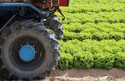 spinga il trattore nel campo di lattuga verde Immagine Stock Libera da Diritti