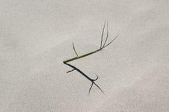 Spinifex dans le sable Images stock