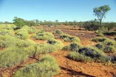 Spinifex in der roten Mitte, Australien lizenzfreie stockfotos