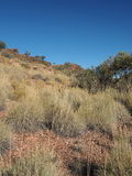 Spinifex gräs på dolomiten går nära Ellery liten vik Arkivfoton