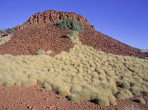Spinifex grass Royalty Free Stock Image