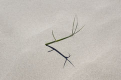Spinifex in het zand Stock Afbeeldingen