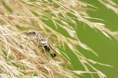 Spinjacht stock fotografie